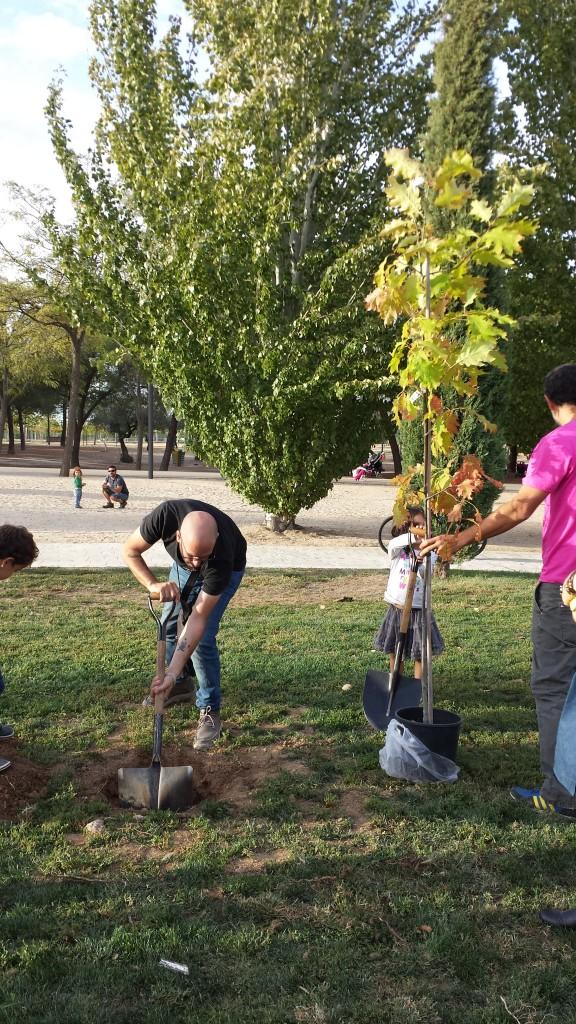 Momento de plantar el árbol